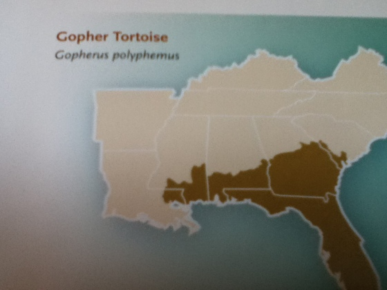 Here is a map of where Gopher Tortoises live.
